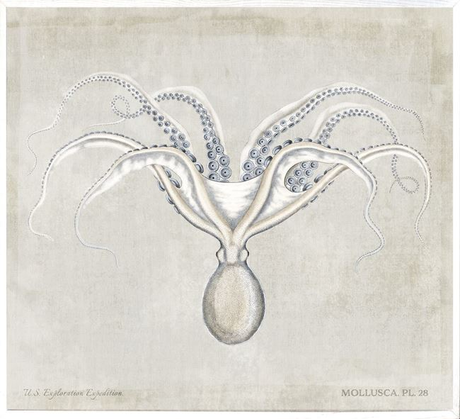 Picture of Mollusca Pl 28 - Large