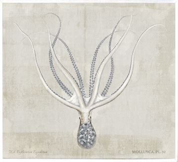 Picture of Mollusca Pl 32 - Large