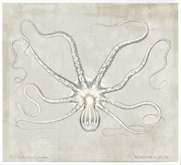 Picture of Mollusca Pl 54 - Large