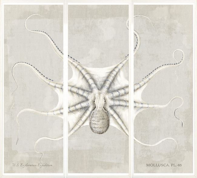 Picture of Mollusca Pl 46 Tryptych