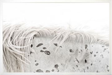 Picture of Appaloosa Large