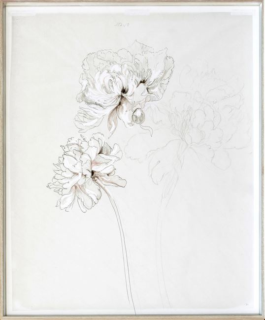Picture of Drawing Study Peonies, Early 20Th Century