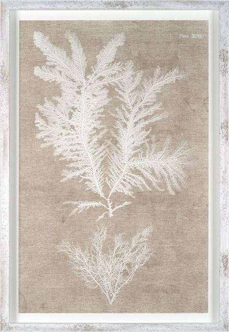 Picture of Nature Printed On Linen IV
