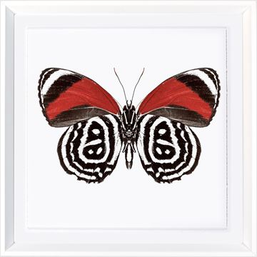 Picture of Vivid Papillons III