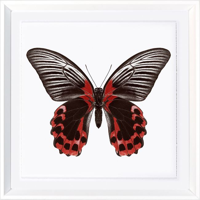 Picture of Vivid Papillons VIII