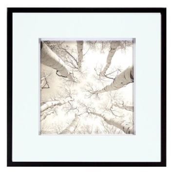 Picture of Silver Birch
