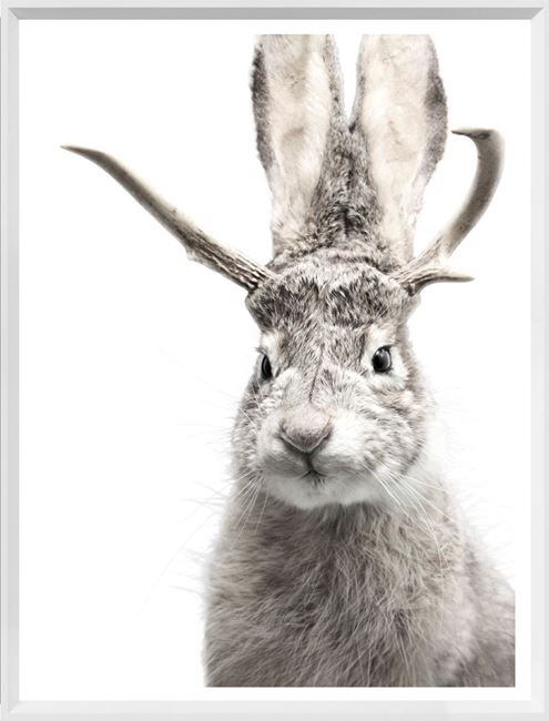 Picture of Mod. Farm - Jackalope - Mini - White