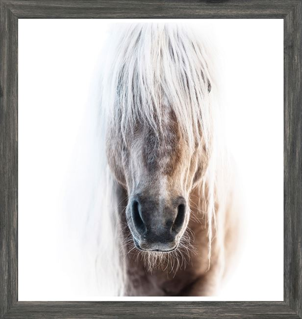 Picture of Mod. Farm - Palomino - Mini - Grey