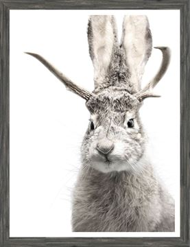 Picture of Jackalope - Grey