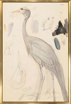 Picture of Lear - Demoiselle Crane - Large