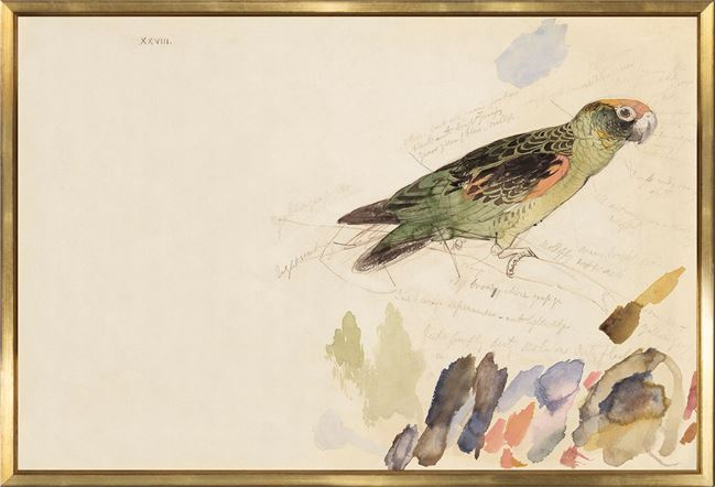 Picture of Lear - Red-Fronted Parrot