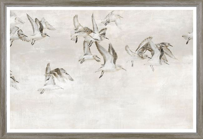 Picture of Sandpipers Take Wing