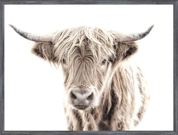 Picture of Mod. Farm - Highland Cow - Mini - Grey