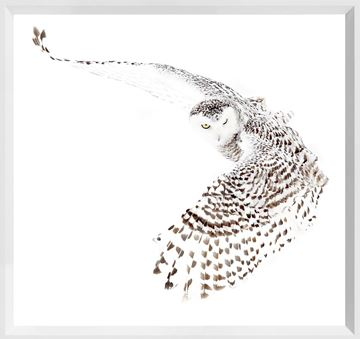 Picture of Mod. Farm - Snowy Owl - Mini - White
