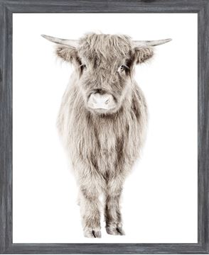 Picture of Mod. Farm - Highland Calf - Mini - Grey