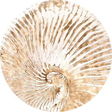 Picture of Acrylic - Nautilus I