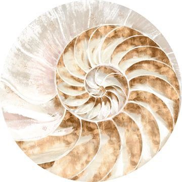 Picture of Acrylic - Nautilus IV