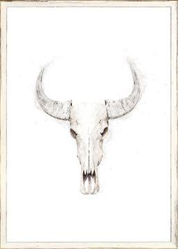 Picture of Buffalo Skull