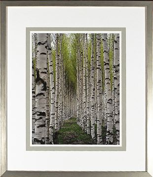 Picture of Birch Study Lime I