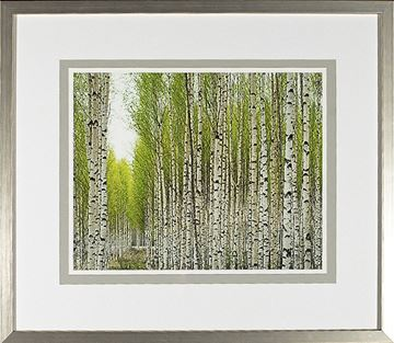 Picture of Birch Study Lime II