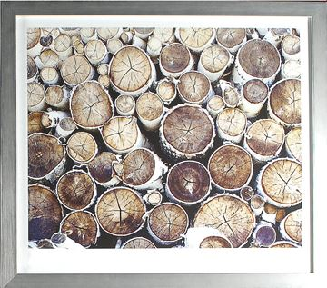 Picture of Birch Abstract III