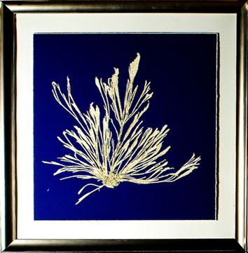 Picture of Seaweed On Navy III