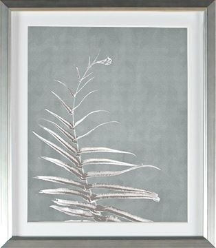 Picture of Jade - Feather Frond