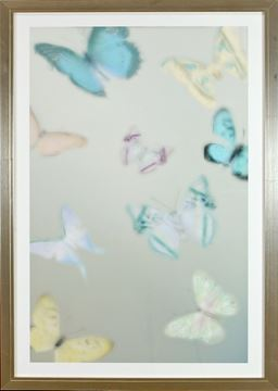 Picture of Papillons Peints I