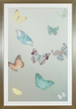 Picture of Papillons Peints II