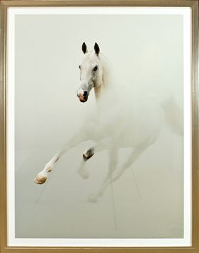 Picture of White Stallion In Fog