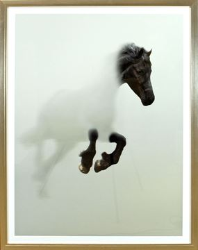 Picture of Black Stallion In Fog