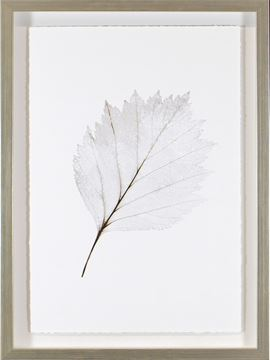 Picture of Silver Leaves I