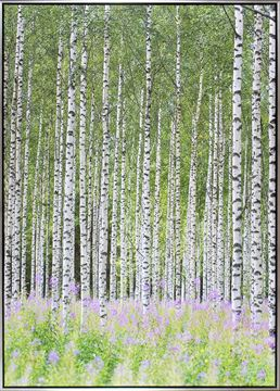 Picture of Aspens In Violet I - Framed Canvas