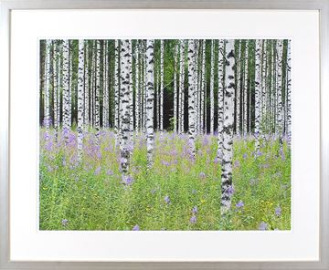 Picture of Aspens In Violet III