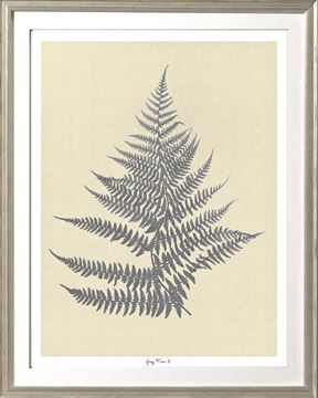 Picture of Grey Fern II Sml