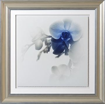 Picture of Blue Focus, Floral I - A