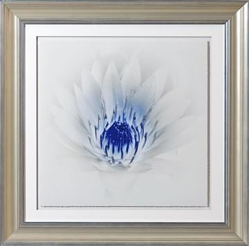 Picture of Blue Focus, Floral II - A