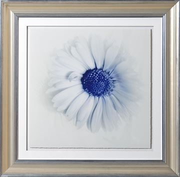 Picture of Blue Focus, Floral IV - A