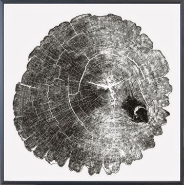 Picture of Wood Cross Section