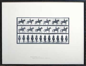 Picture of Muybridge - Horse & Rider I