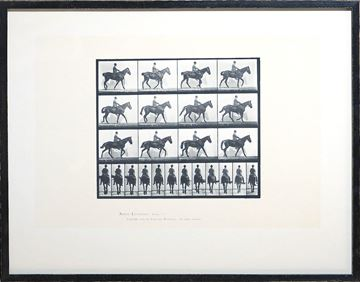 Picture of Muybridge - Horse & Rider II