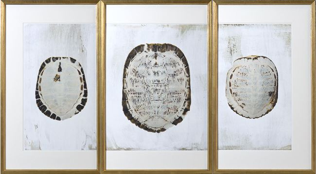 Picture of Sun Bleached Shell - Triptych