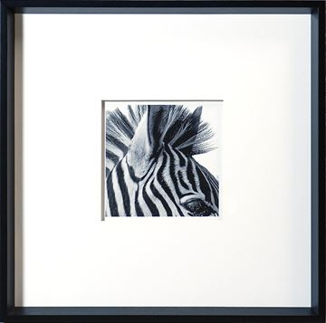 Picture of Zebra Detail