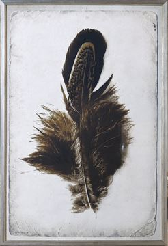 Picture of Feather Study II