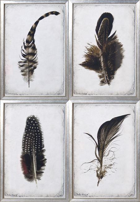 Picture of Feather Study S/4