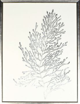 Picture of Silver Foil Algae IV