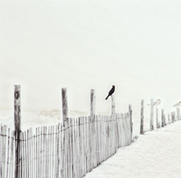 Picture of Acrylic-Blackbird On Fence