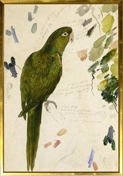 Picture of Lear - Vibrant Green Parrot - Lrg