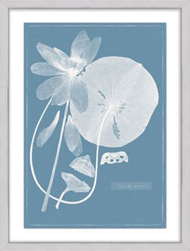 Picture of Cyanotype Water Lilies II