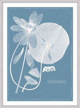 Picture of Cyanotype Water Lilies II - Large